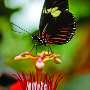 Travel_CostaRica_butterfly_AndresOjeda