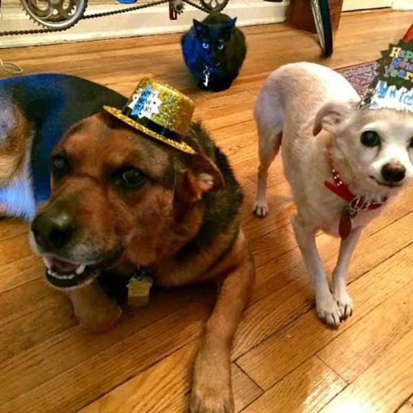 Fur Family New Year's Resolutions