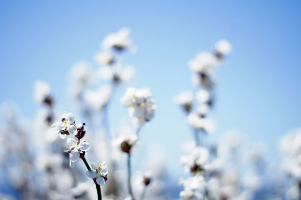 The Often-Misunderstood Premise of the Cotton Ceiling